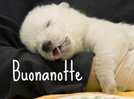Foto dolci e simpatiche per augurare la buonanotte su - Frasi hot da dire a letto ...