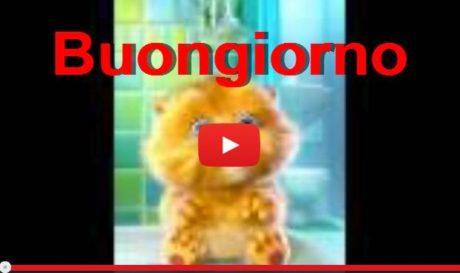Video per il buongiorno su whatsapp da scaricare gratis for Immagini divertenti di buongiorno per whatsapp