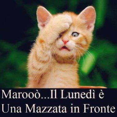 Foto per il buongiorno su whatsapp segreti e consigli for Immagini divertenti di buongiorno per whatsapp